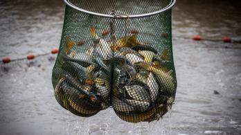 Karácsonykor több halat eszik a magyar
