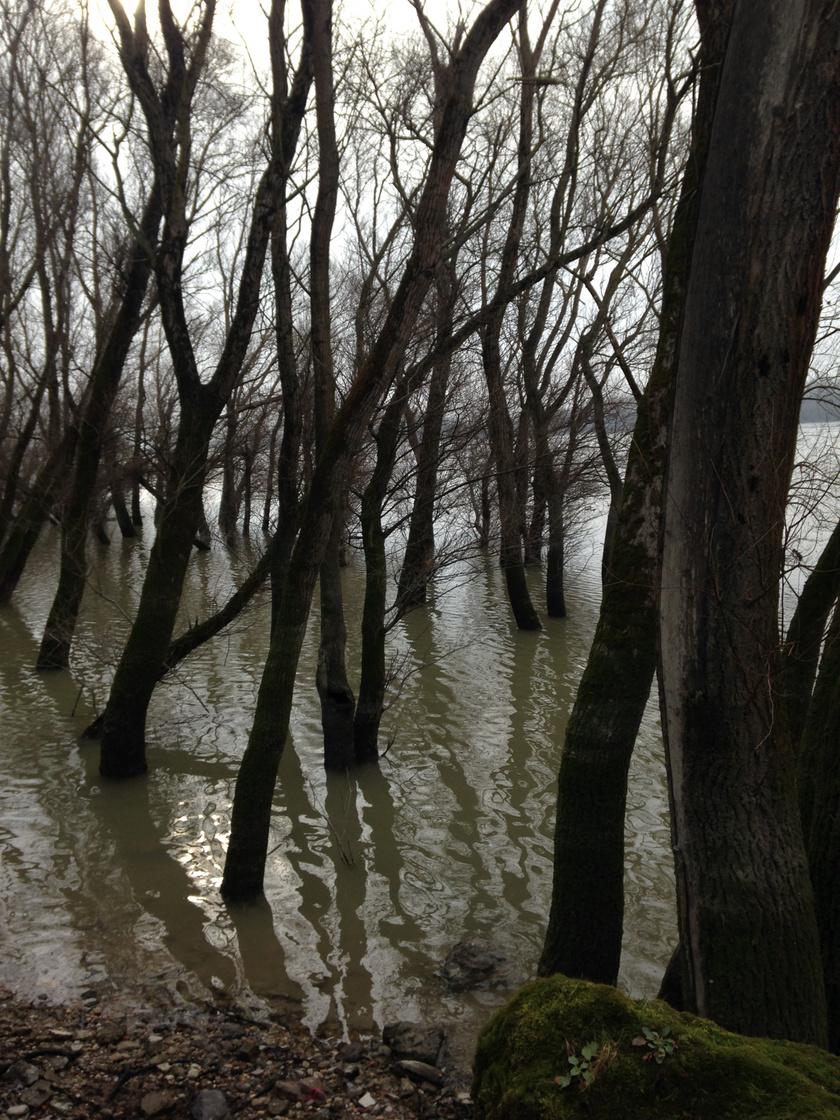 A Duna Vácnál
