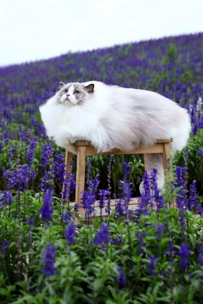 Ez a macska előző életében valószínűleg egy felhő volt.