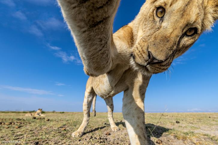 tk3s sn lion takes selfie 1