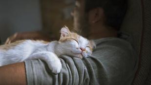 Miért alszik rajtam a macskám? Lehet, hogy mégis szeret?