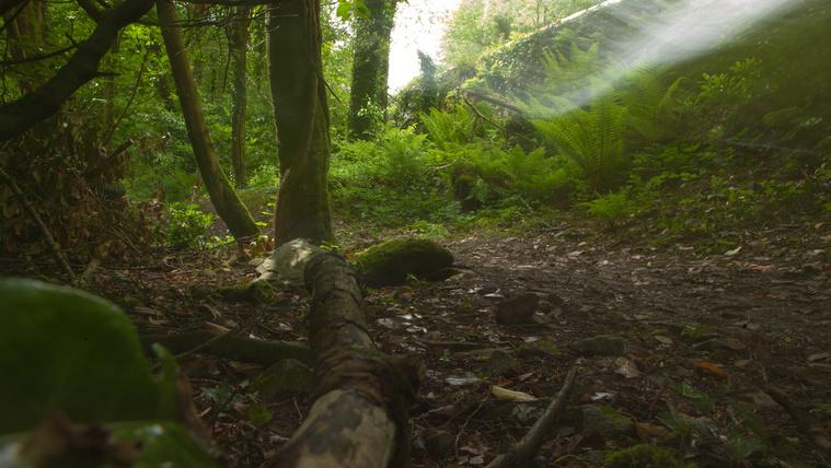 Erdő a nyári Man-szigeten, ami tele van kísértetekkel és történetekkel