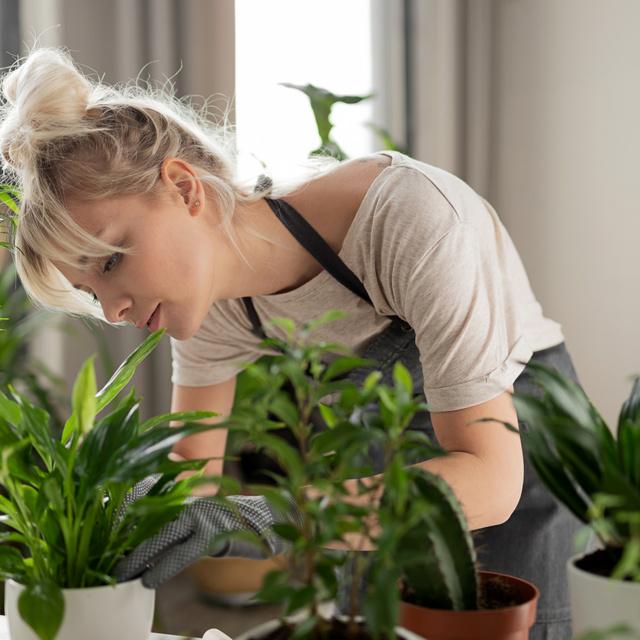 A szobanövények 4 áldásos hatása az otthonodban: nem csak szebbé varázsolják a lakást
