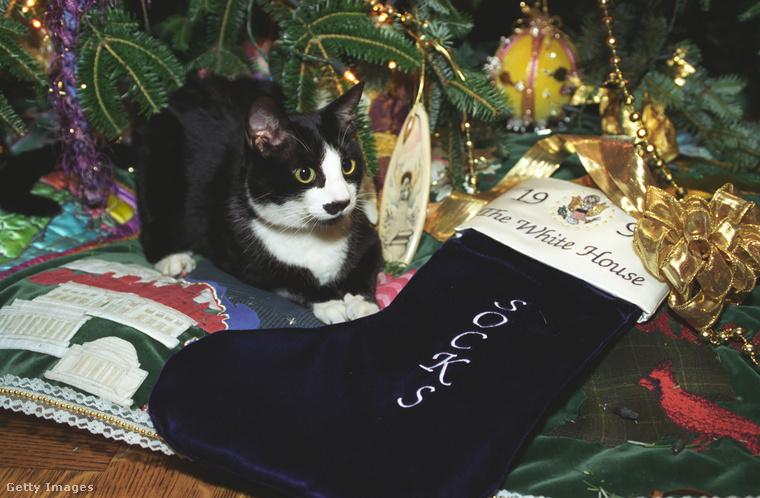 Oké, és mit csinál egy meglepett macska a karácsonyfa alatt, egy zoknik feliratú zoknival? A rejtvény feloldása, hogy ez az állat Bill Clinton és családja macskája, amely az elnöki állatoknak járó bánásmódot élvezi ezen a fotón, 1993-ban