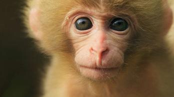 Megöltek közel 30 majmot a NASA kutatóközpontjában