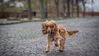 Szalmonellás kutyaeledelt hívtak vissza