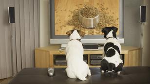 Így látja a kutya a tévét