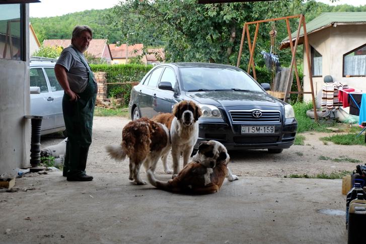 Karesz pont annyit dolgozott az autón, mint a kutyák. Mert a fiúk csináltak mindent