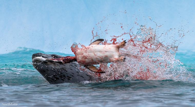 A vízben sem kevésbé drámai az állatok közötti küzdelem