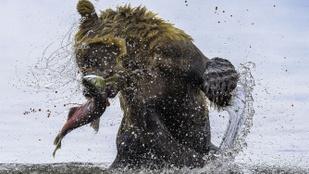 12 ámulatba ejtő fotó az állatvilág vadságáról