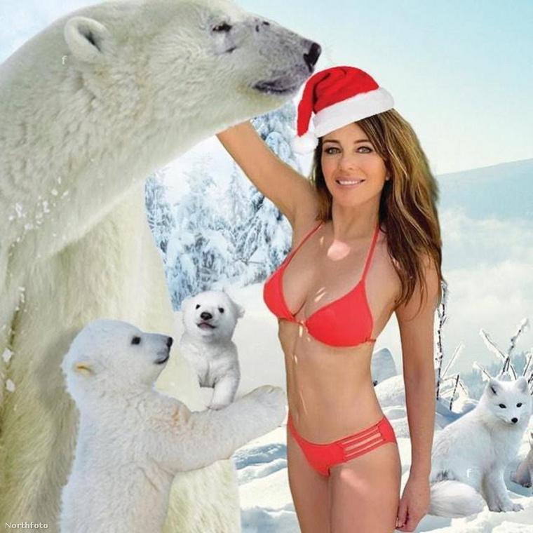 Illetve, hogy a nagy sikerű Fenékstírölő Farkasok után idén Mellstírölő Medvéket fotosoppolt magának.