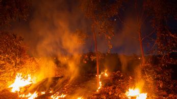 Tízéves rekordot döntött az erdőtüzek száma Brazíliában