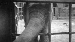 Amikor Budapest népe megette az állatkert lakóit: az ostrom alatt ez is megtörtént
