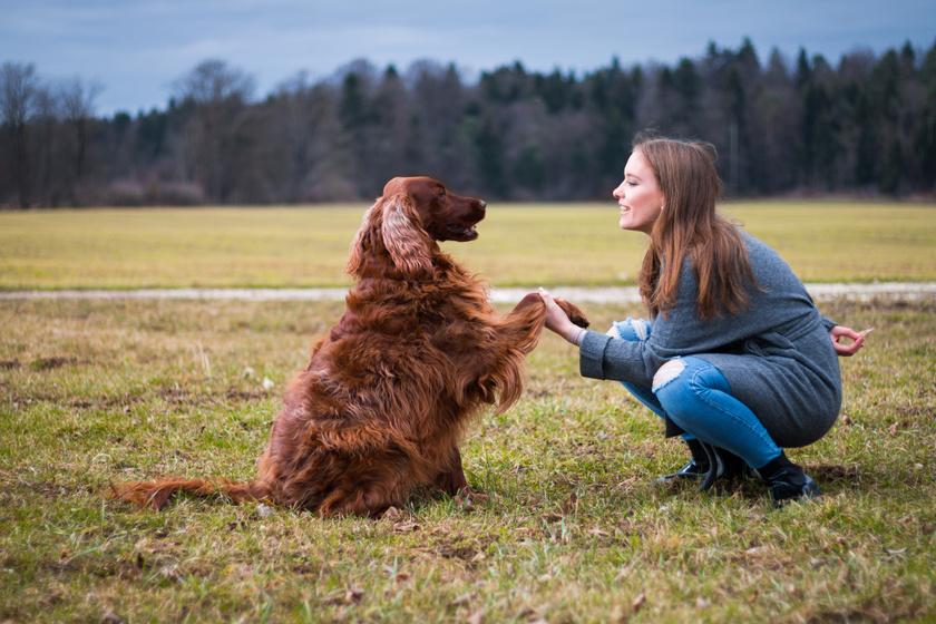 Mit tesz az aggyal és a szervezettel, ha valakinek kutyája van? Boldogabbá válik a neurológusok szerint