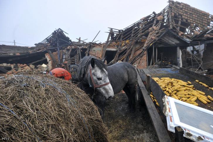 Ló áll egy összedõlt ház romjai elõtt a horvátországi Majske Poljane faluban
