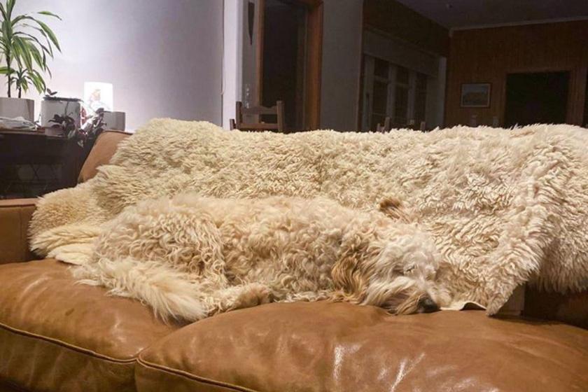 Egy egyszerű feladvánnyal indítunk: hol van a kutya a képen?