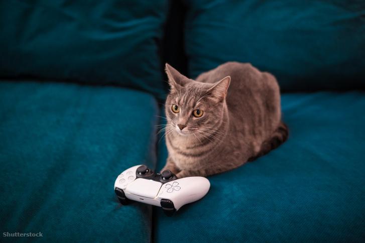 """A DualSense haptikus feedbackjének köszönhetően talán a """"Stray"""" nevű PS5-ös, macskás játék irányítása is nagyobb élmény lesz Cirminek."""