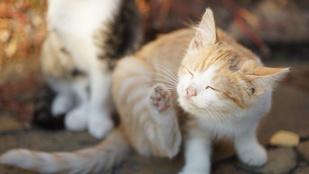 Bolhás kutya és macska: így szabadulj meg az élősködőktől