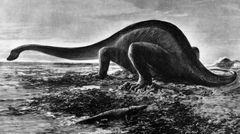 Tojásain kotló dinoszaurusz megkövesedett maradványait tárták fel Kínában