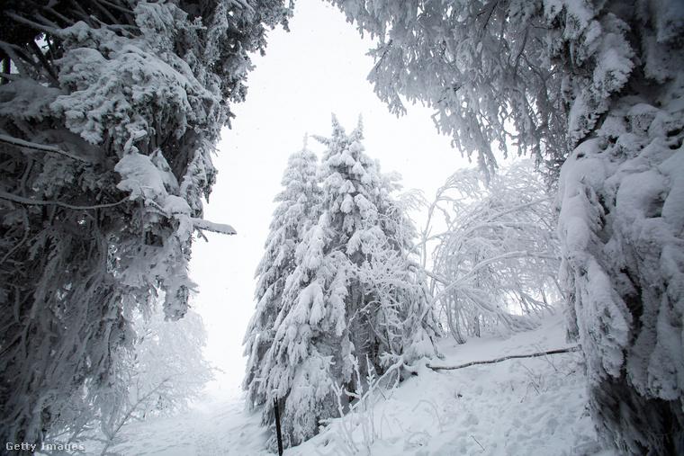 Waldkirch: egy erdei út.