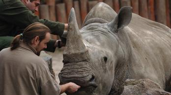 Rangos szakmai szervezet élére került a fővárosi állatkert főállatorvosa