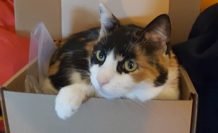 Bella is támogatja brit tudósok azon tudományos elméletét, hogy a cicák szeretik a dobozokat.