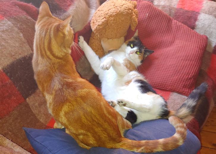 Bella és Cicero szeretnek játékból bunyózni, de a macskák alapvetően kerülik konfliktust és a problémákat, és inkább elmenekülnek, elbújnak.