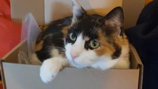Miért szeretnek dobozba bújni a macskák?