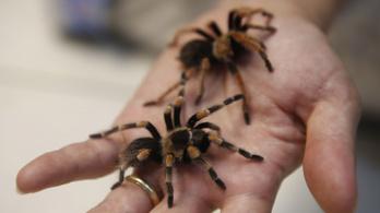 Tarantula pókokat és skorpiókat tartalmazó csomagot foglaltak le a Fülöp-szigeteken