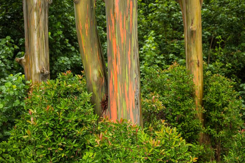 Hihetetlen, hogy néznek ki: mutatjuk a világ legkülönösebb fafajtáit