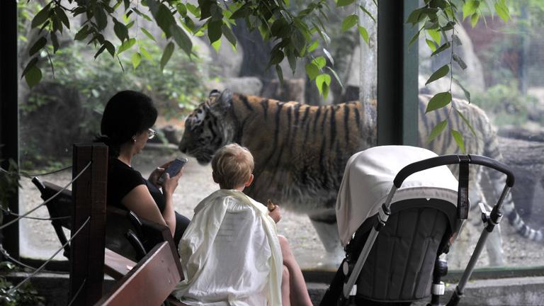 A budapesti állatkertben eddig még tesztelni sem kellett senkit