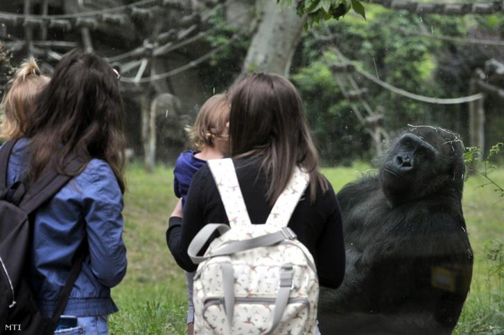 A budapesti állatkert gorillaháza