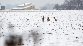 Újra jön a hó, viharos széllökések miatt kiadták a riasztást