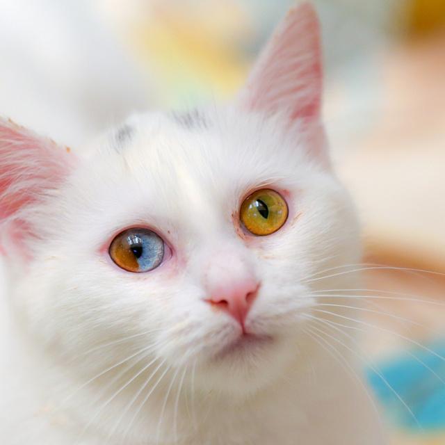 Szinte káprázik a szemünk a fotóktól: ritkán látni ilyen színű állatokat a természetben