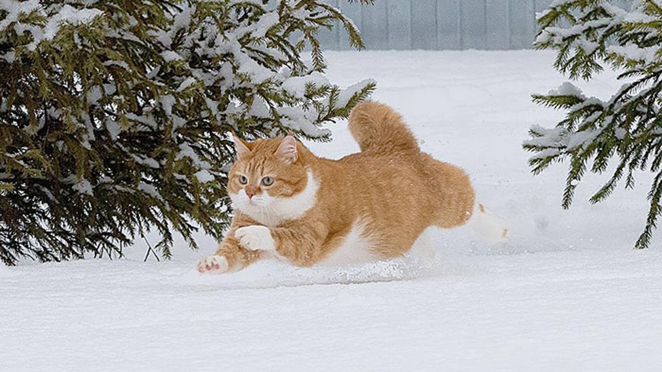 cica-hóban-borító
