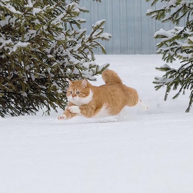 Cuki fotókon a bundás cica és a hó találkozása - Élvezi minden pillanatát