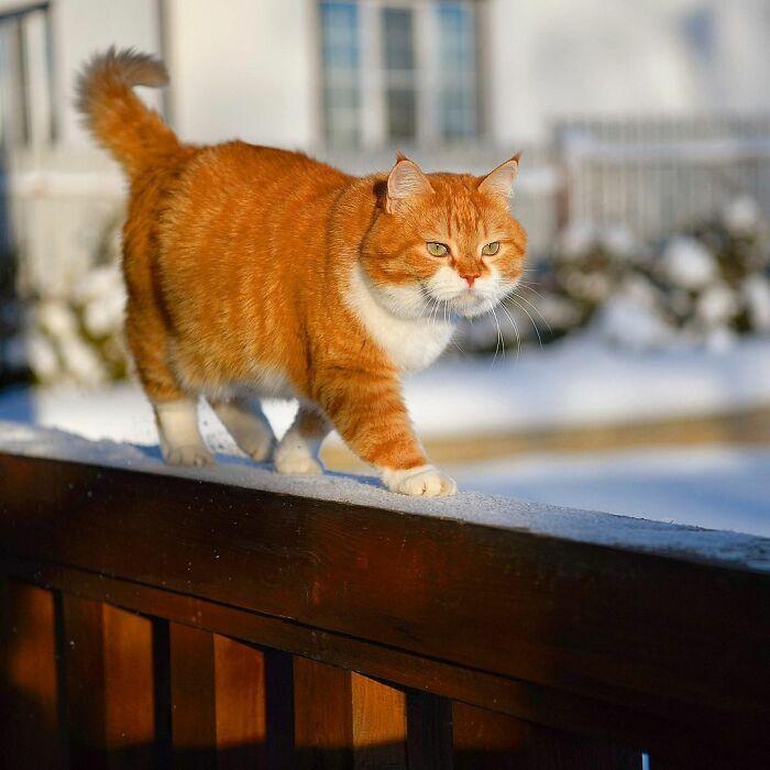 Ginger kezdetben még csak óvatosan vizsgálta, mi is lehet ez a hideg, fehér dolog, ami az égből hullott.