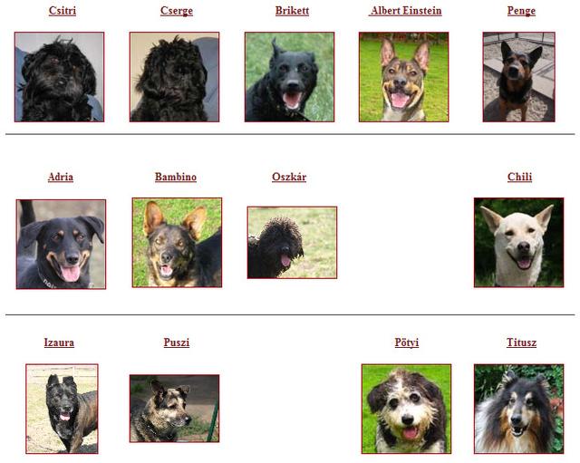Örökbefogadható kutyák a Lelenc Kutyamentő Egyesületnél