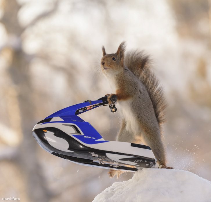 tk3s swns snow squirrels 06