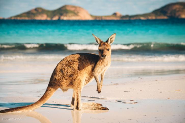 Mindeközben egy kenguru Ausztráliában (Akit hidegen hagynak az események)