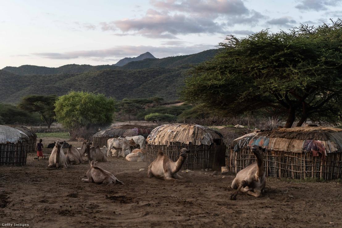 Tevék Kenyában