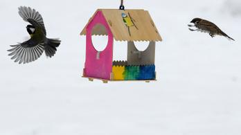Bődületes sikert hozott az okos-madáretető