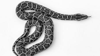 Mágneses módszerrel védik magukat a kígyók a méreg ellen