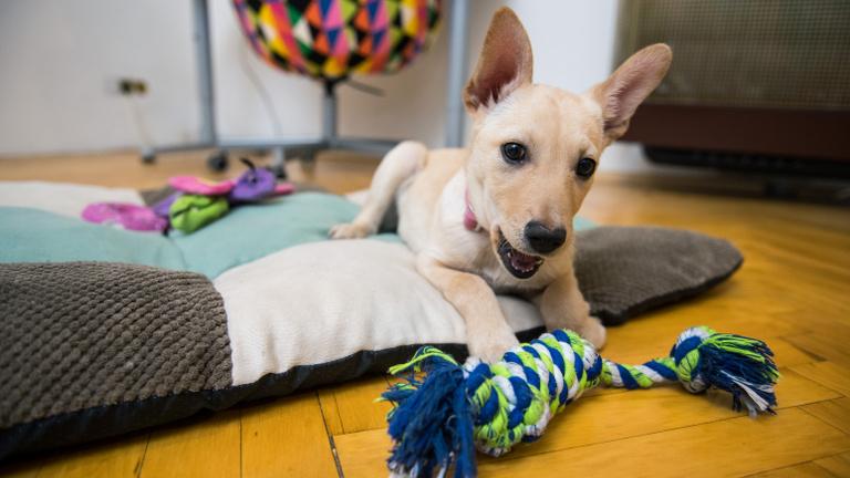 Mennyibe kerül ma itthon kutyát tartani?