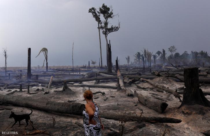 A brazil esőerdő kéthektáros kivágott és leégetett részlete 2019 szeptemberében