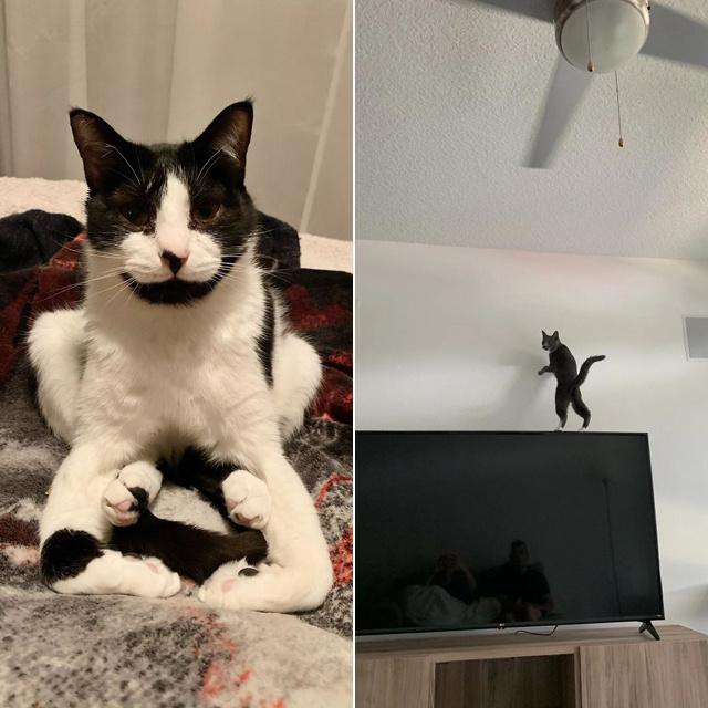 8 macskás fotó, amire nincs magyarázat – Vajon mire gondolhattak?
