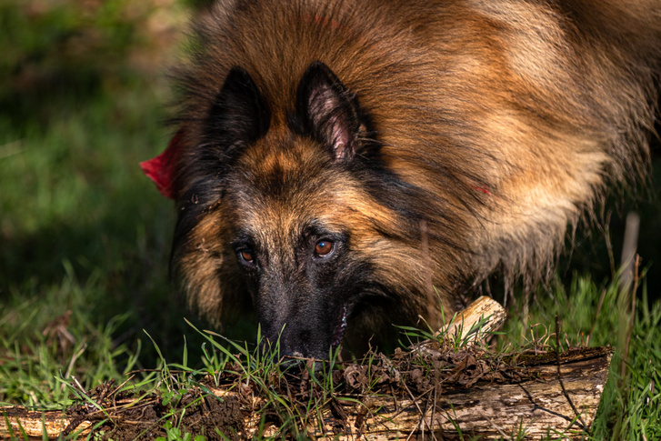 Kósza, Gácsi Márta kutyája
