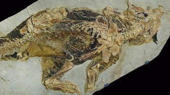 Megvizsgálták egy dinoszaurusz kloákáját a brit tudósok