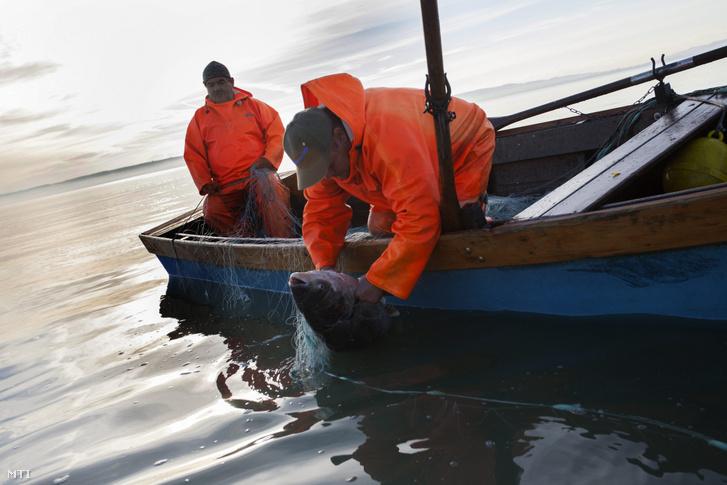 Pethő Krisztián (b) és Csanaki Gábor halászok hálóval csónakba emelnek egy busát a Balatonon, Balatonudvari közelében