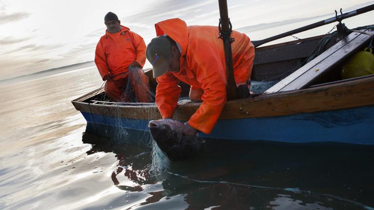Mit csinálnak a halak télen a Balatonban?